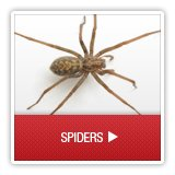 Spiders - A1 Environmental Pest Management & Consulting - spiders
