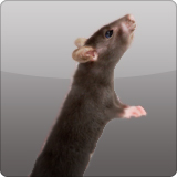 Rodent Removal - A1 Environmental Pest Management & Consulting - animaltrapping