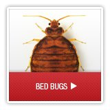 Bed Bug Removal Brighton CO