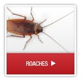 Roaches - A1 Environmental Pest Management & Consulting - roaches